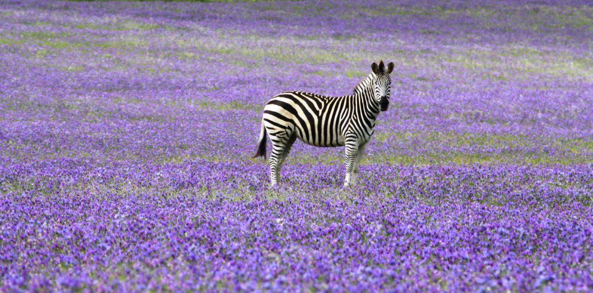 África do Sul: Turismo e como se virar