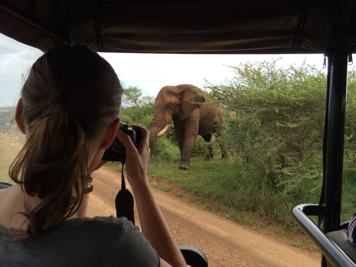 Onde fazer safari na África do Sul