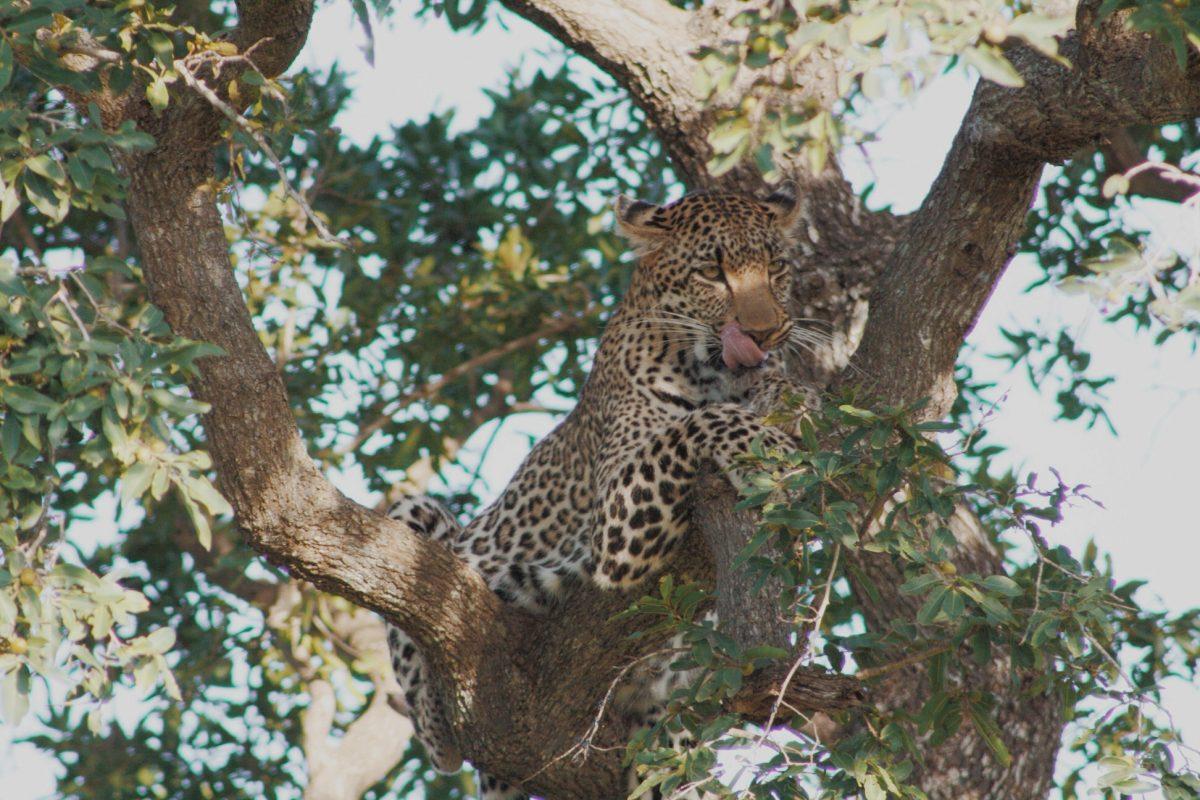 Safari no Kruger Park na África do Sul