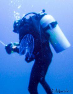 mergulhador na praia do tofo com arraia