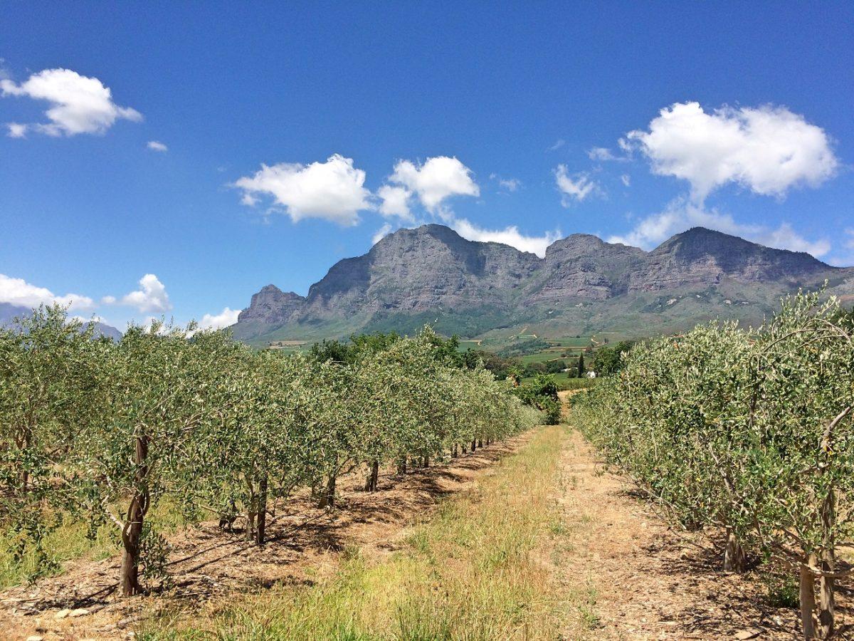5 melhores vinícolas em Franschhoek