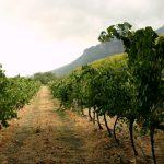 10 melhores vinícolas em Stellenbosch