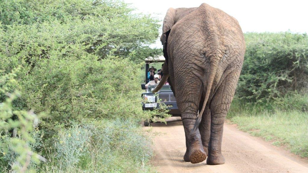 Onde ficar no Kruger