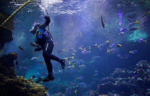 Onde fazer mergulho em Moçambique