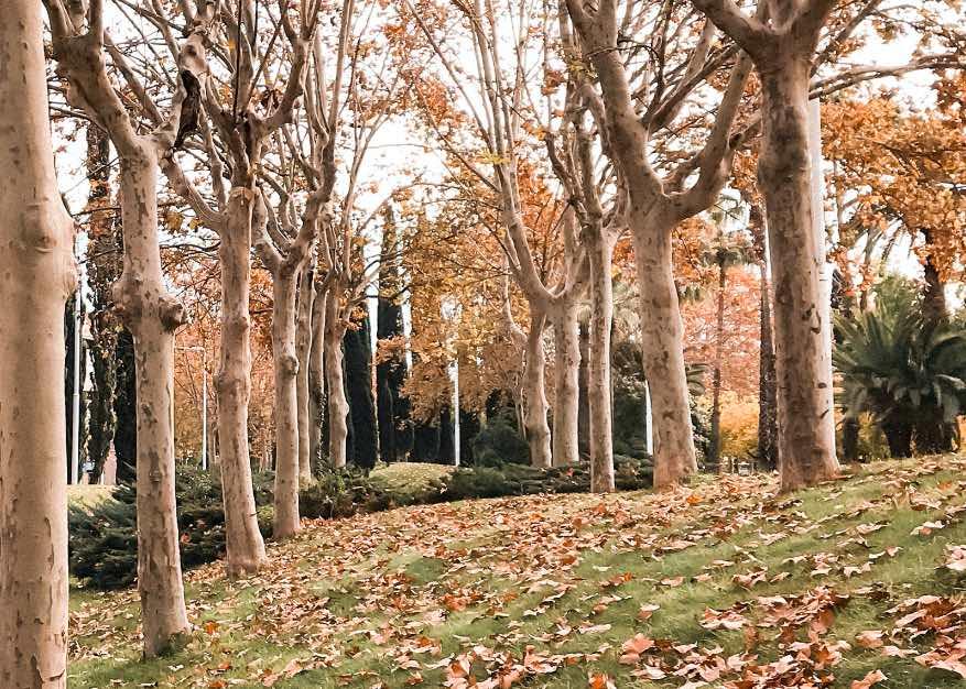 Barcelona-em-Novembro-2019