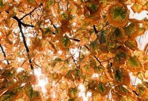 barcelona-em-outubro-outono-arvore