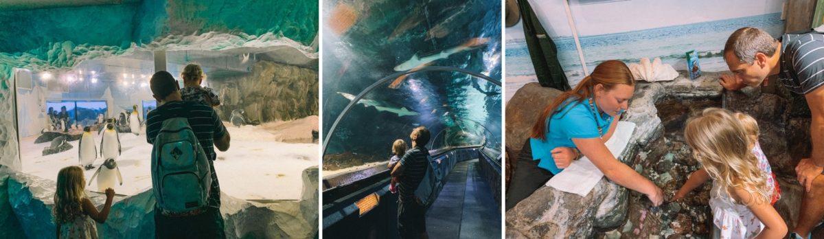 aquario em auckland o que fazer